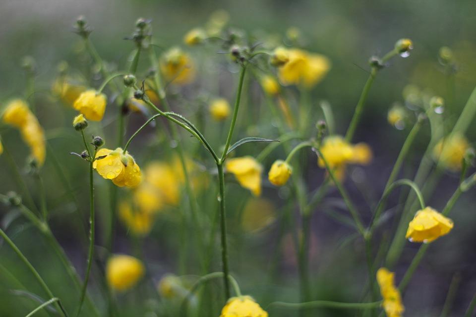 Låt en luftrenare rena luften – bra för pollenallergiker